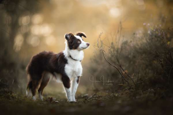 fotograaf_Enschede_Haron Haghuis Hondenfotografie_6.jpg