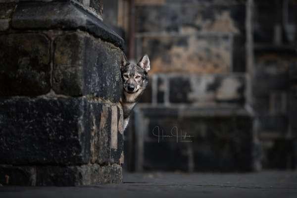 fotograaf_Enschede_Haron Haghuis Hondenfotografie_14.jpg