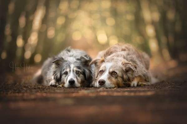 fotograaf_Enschede_Haron Haghuis Hondenfotografie_2.jpg