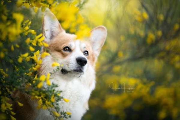 fotograaf_Enschede_Haron Haghuis Hondenfotografie_15.jpg