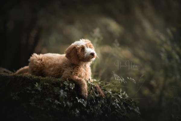 fotograaf_Enschede_Haron Haghuis Hondenfotografie_13.jpg