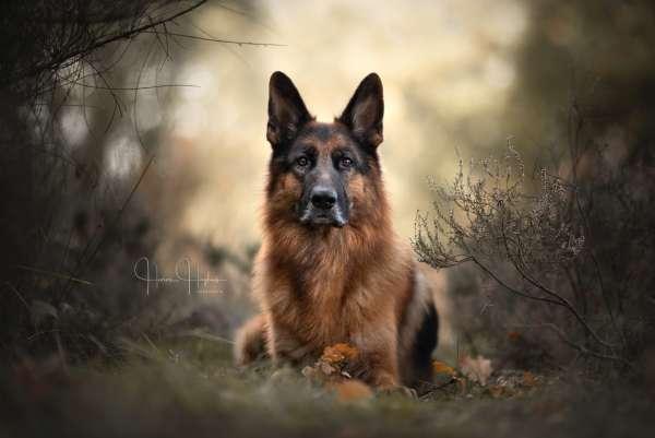fotograaf_Enschede_Haron Haghuis Hondenfotografie_9.jpg