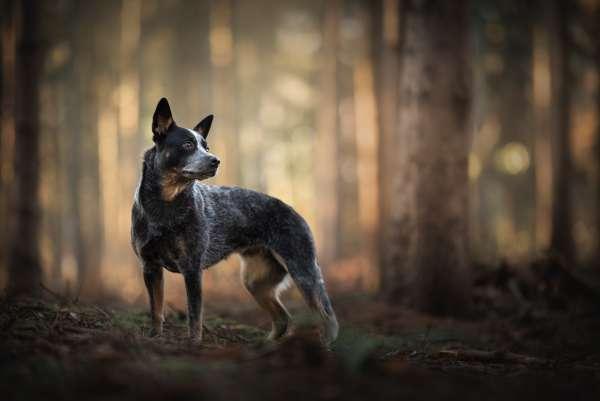 fotograaf_Enschede_Haron Haghuis Hondenfotografie_17.jpg