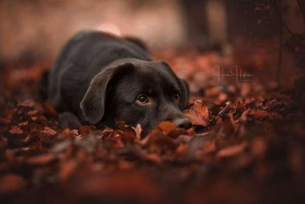 fotograaf_Enschede_Haron Haghuis Hondenfotografie_12.jpg