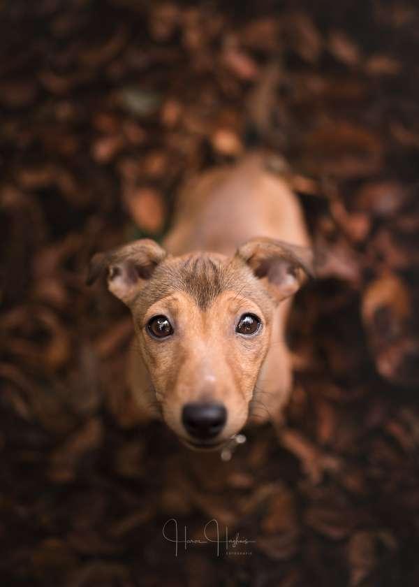 fotograaf_Enschede_Haron Haghuis Hondenfotografie_8.jpg