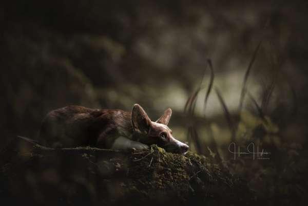 fotograaf_Enschede_Haron Haghuis Hondenfotografie_7.jpg