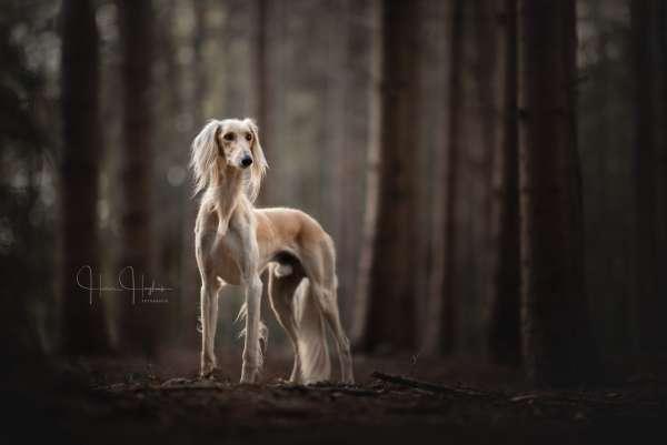 fotograaf_Enschede_Haron Haghuis Hondenfotografie_3.jpg