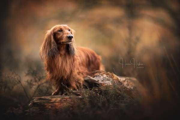 fotograaf_Enschede_Haron Haghuis Hondenfotografie_5.jpg