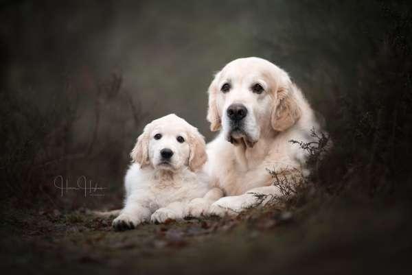 fotograaf_Enschede_Haron Haghuis Hondenfotografie_10.jpg