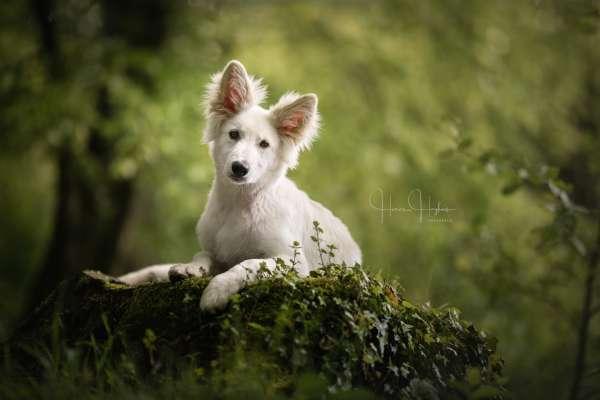 fotograaf_Enschede_Haron Haghuis Hondenfotografie_16.jpg