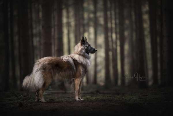 fotograaf_Enschede_Haron Haghuis Hondenfotografie_11.jpg
