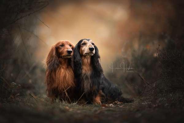 fotograaf_Enschede_Haron Haghuis Hondenfotografie_4.jpg