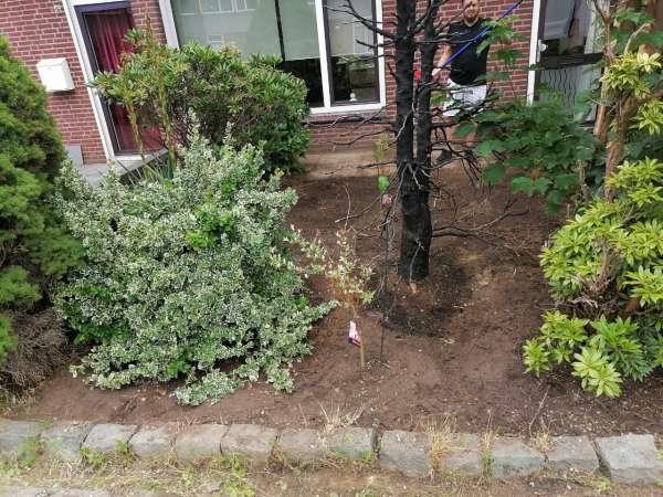schilder_Den Bosch_arend allround_16.jpg