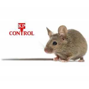 Keijzer Pest Control.jpg
