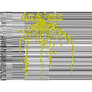 Art de Jardin.jpg